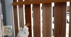 住宅 木の風除け格子の取り替えと塗装